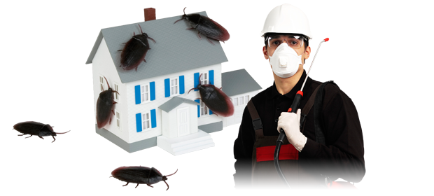 Pest issues are no more a threat with modern pest control organizations around!