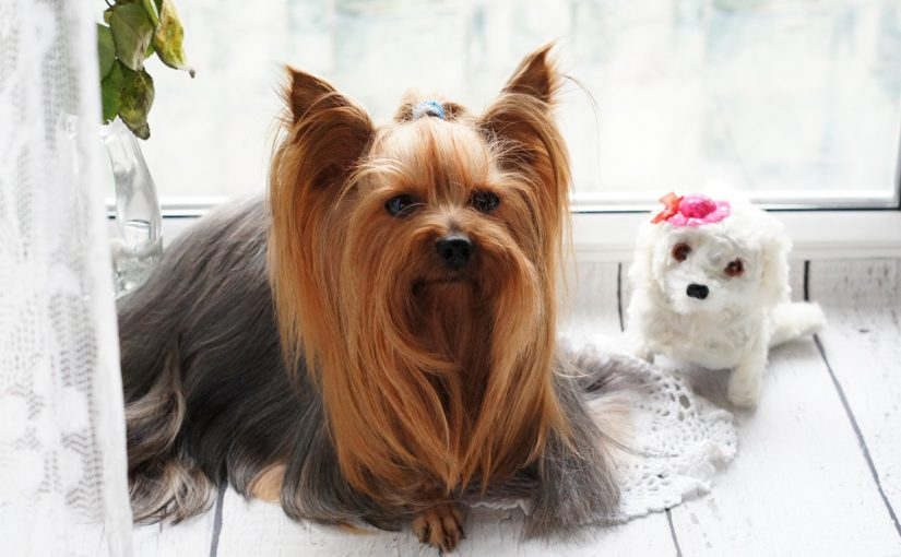 How to groom our pets with time-saving?